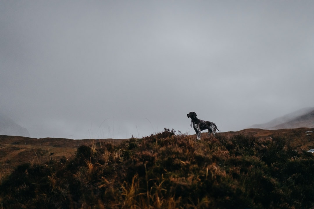 Glencoe elopement with a dog
