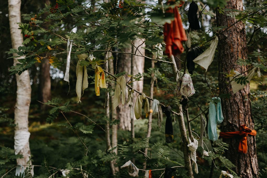 Clootie Well - Black Isle rags hanging from trees