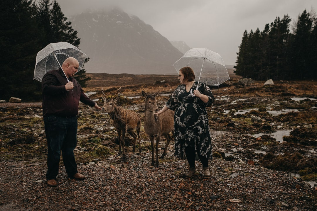 Couples adventure session in Glencoe feeding the deer and stags