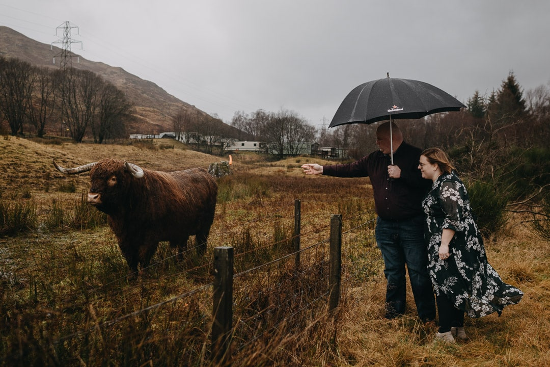 Meeting Highland cows on a Scottish adventure session near Glencoe