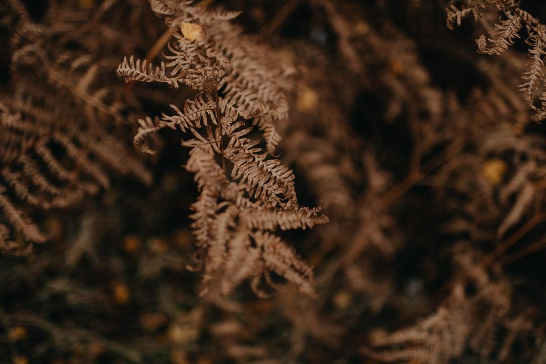 autumn fern in finnich glen