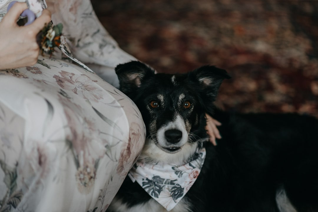 Eloping with your dog